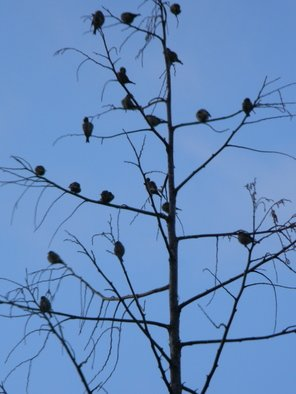 Artist: Debbi Chan - Title: birds of a feather huddle in tree - Medium: Color Photograph - Year: 2012