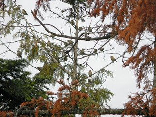 Artist: Debbi Chan - Title: birds sitting in a tree - Medium: Color Photograph - Year: 2011