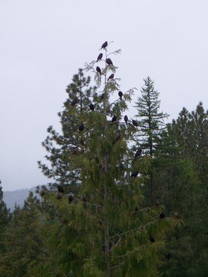 Color Photograph by Debbi Chan titled: blackbirds blow in the wind, created in 2010