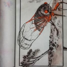 cicada  bug up close