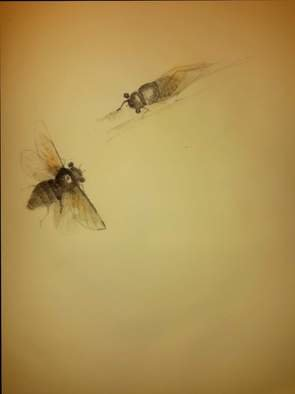 Debbi Chan: 'cicada pair', 2015 Graphite Drawing, Fauna. Artist Description:  This drawing was done with brush and loose graphite. ...