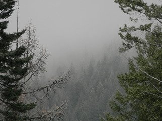 Artist: Debbi Chan - Title: crawling through the trees like fog - Medium: Color Photograph - Year: 2011