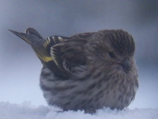 Artist: Debbi Chan - Title: cute cold bird - Medium: Color Photograph - Year: 2012