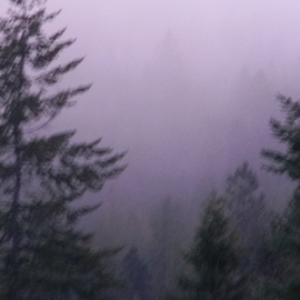 Debbi Chan: 'deep into the fog', 2010 Color Photograph, Landscape. Artist Description:      photos of Idaho     ...
