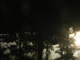 Artist: Debbi Chan - Title: deer reflection in my pond - Medium: Color Photograph - Year: 2011