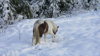 Debbi Chan Artwork digging out, 2010 Color Photograph, Equine