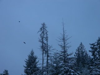 Debbi Chan: 'early morning flight', 2012 Color Photograph, Birds. Artist Description:            photos from Idaho.             ...