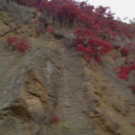 Debbi Chan: 'fall hill ', 2013 Color Photograph, Landscape. Artist Description:       Photos from Idaho.                            photos from Idaho.          photos from Idaho.     ...
