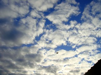 Color Photograph by Debbi Chan titled: flying home for meals, 2010