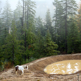 Debbi Chan: 'fog and a spotted horse', 2010 Color Photograph, Landscape. Artist Description:         photos from idaho       ...
