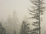 Artist: Debbi Chan - Title: fog art - Medium: Color Photograph - Year: 2011