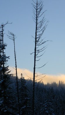 Debbi Chan: 'fog comes in color', 2010 Color Photograph, Beauty. Artist Description:                    photos from idaho.                   ...