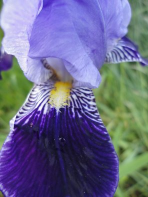 Artist: Debbi Chan - Title: from mouth of iris - Medium: Color Photograph - Year: 2011