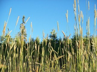 Color Photograph by Debbi Chan titled: from the grass i see, 2010