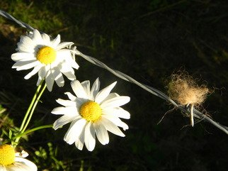 Artist: Debbi Chan - Title: horse tail and daisy - Medium: Color Photograph - Year: 2011