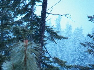 Artist: Debbi Chan - Title: iced pine cone among trees - Medium: Color Photograph - Year: 2012