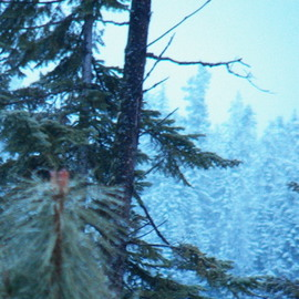 Debbi Chan: 'iced pine cone among trees', 2012 Color Photograph, Beauty. Artist Description:     PHOTOS FROM IDAHO.                                                                                                                                                                                                                                                                                                                                                                                                                                                                                                             ...