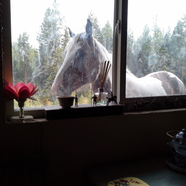 Debbi Chan Artwork is breakfast ready yet, 2013 Color Photograph, Equine