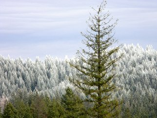Artist: Debbi Chan - Title: lots of Christmas trees here - Medium: Color Photograph - Year: 2011