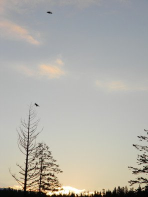 Artist: Debbi Chan - Title: morning flight - Medium: Color Photograph - Year: 2011
