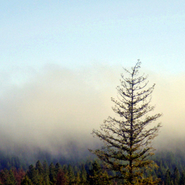 Debbi Chan: 'morning fog in mountains', 2010 Color Photograph, Landscape. Artist Description:  will print most common sizes. ...