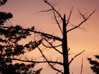 Artist: Debbi Chan - Title: morning over naked tree line - Medium: Color Photograph - Year: 2012