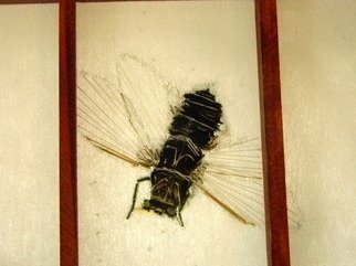 Artist: Debbi Chan - Title: my cicada - Medium: Color Photograph - Year: 2011