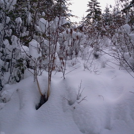 my studio in distant snow