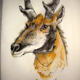nw fauna proghorn antelope