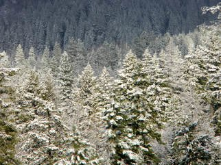 Debbi Chan: 'one white tree after the other', 2012 Color Photograph, Trees. Artist Description:     photos fromj idaho.   ...