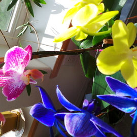orchid Easter