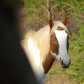 Debbi Chan Artwork portrait of my willow, 2010 Color Photograph, Equine