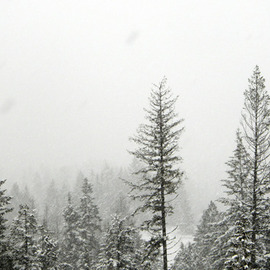 Debbi Chan: 'positive negative snow', 2010 Black and White Photograph, Landscape. Artist Description:         photos from Idaho.       ...