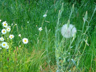 Color Photograph by Debbi Chan titled: puffball with neighboring wildflowers, created in 2010