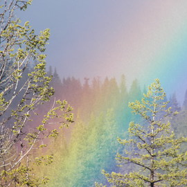 rainbow  colors trees