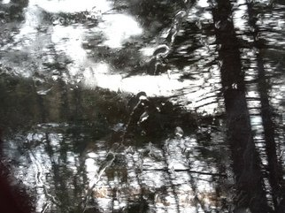 Debbi Chan: 'seeimg thru a wet car window', 2012 Color Photograph, Trees. Artist Description:        Photos from Idaho.       ...