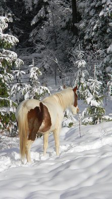 Debbi Chan Artwork she rests in the snow with held low, 2010 Color Photograph, Equine