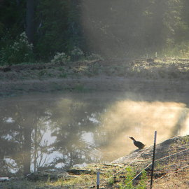 sister duck bathes in morning sun