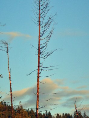 Color Photograph by Debbi Chan titled: skeleton tree with color, 2010