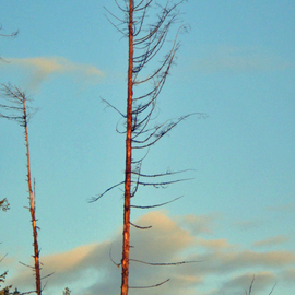 skeleton tree with color