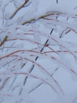 Color Photograph by Debbi Chan titled: snow laden willow, created in 2012
