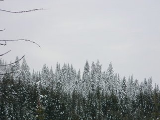 Debbi Chan: 'snow tops', 2012 Color Photograph, Trees. Artist Description:        photos from Idaho.                ...