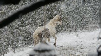 Debbi Chan Artwork snowy jaunt, 2011 Color Photograph, Equine
