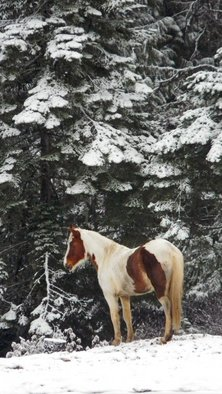 Debbi Chan: 'stands  under the trees', 2011 Color Photograph, Equine. Artist Description:       photos from idaho      ...