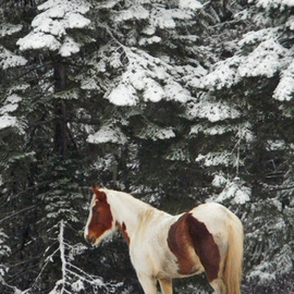 Debbi Chan Artwork stands  under the trees, 2011 Color Photograph, Equine