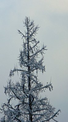 Debbi Chan Artwork starkness of cold, 2010 Color Photograph, Trees