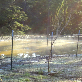 Debbi Chan Artwork steam rising from my pond, 2012 Color Photograph, Landscape
