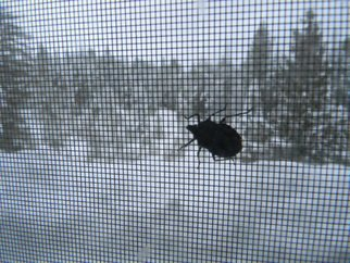 Artist: Debbi Chan - Title: stinky stinky stink bug - Medium: Color Photograph - Year: 2012