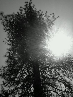 Debbi Chan Artwork sunlit in black and white, 2011 Color Photograph, Trees