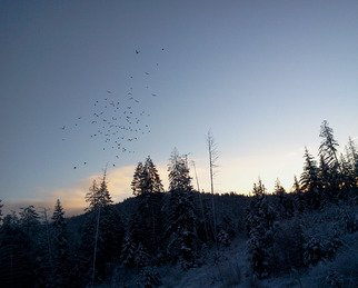 Artist: Debbi Chan - Title: sunrise flock to feed - Medium: Color Photograph - Year: 2012